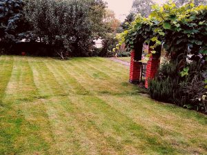 Affordable grass cutting service Grounds & Gardens in the Waveney Areas