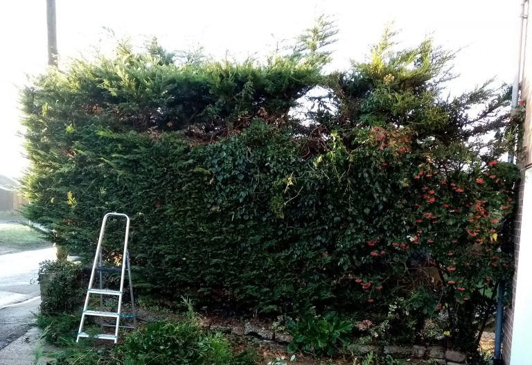 Hedge Reduction near Beccles.groundsandgardens.co.uk