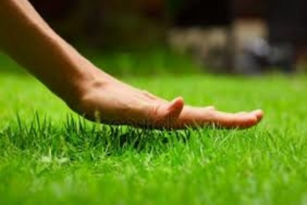 Lawn care in Bungay, Beccles, Waveney Valley,South Norfolk,North Suffolk