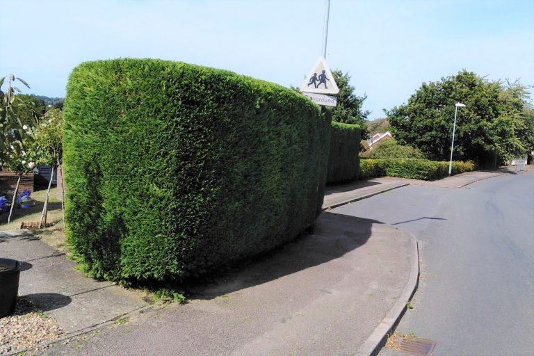 Hedge Cutting in Waveney Valley Bungay Beccles Suffolk groundsandgardens.co.uk