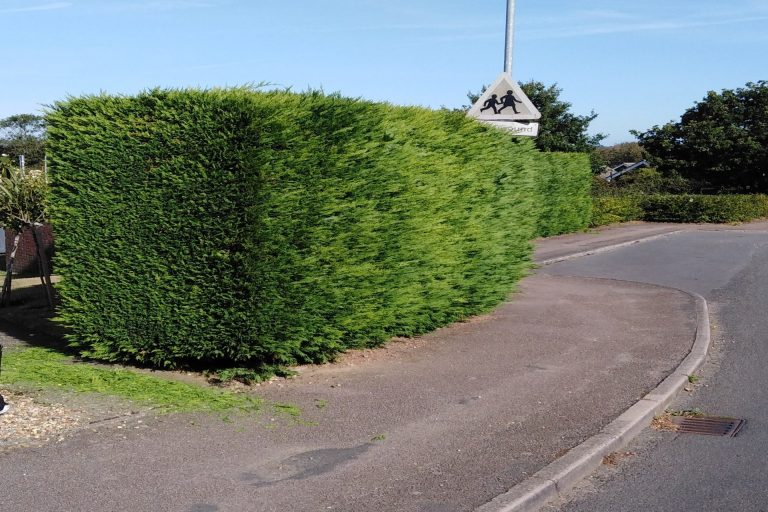 Hedge cutting in Bungay Suffolk.groundsandgardens.co.uk