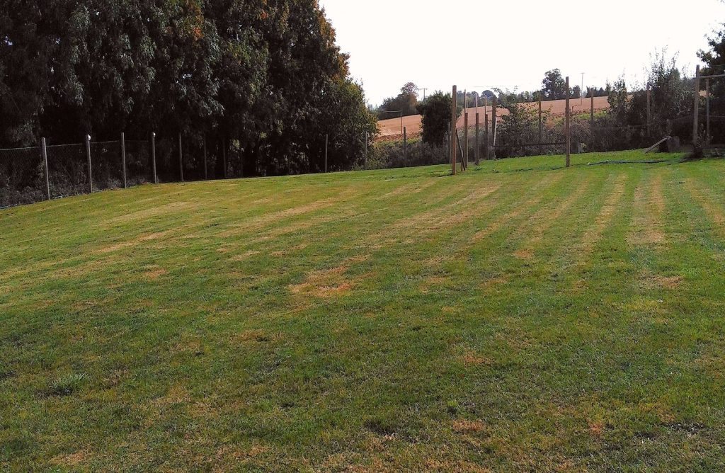 Grounds & Gardens ,grass cutting as part of our garden services in Shipmeadow near Bungay & Beccles