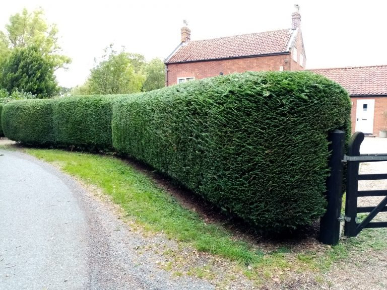 Grounds & Gardens Hedge cutting service Waveney District Norfolk and Suffolk