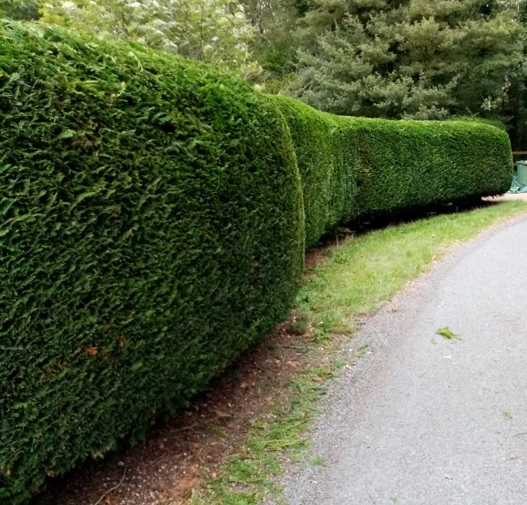Hedge cutting in Waveney districts Grounds & Gardens- All your garden needs""