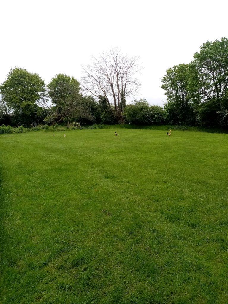 Grass cutting Ditchingham Bungay