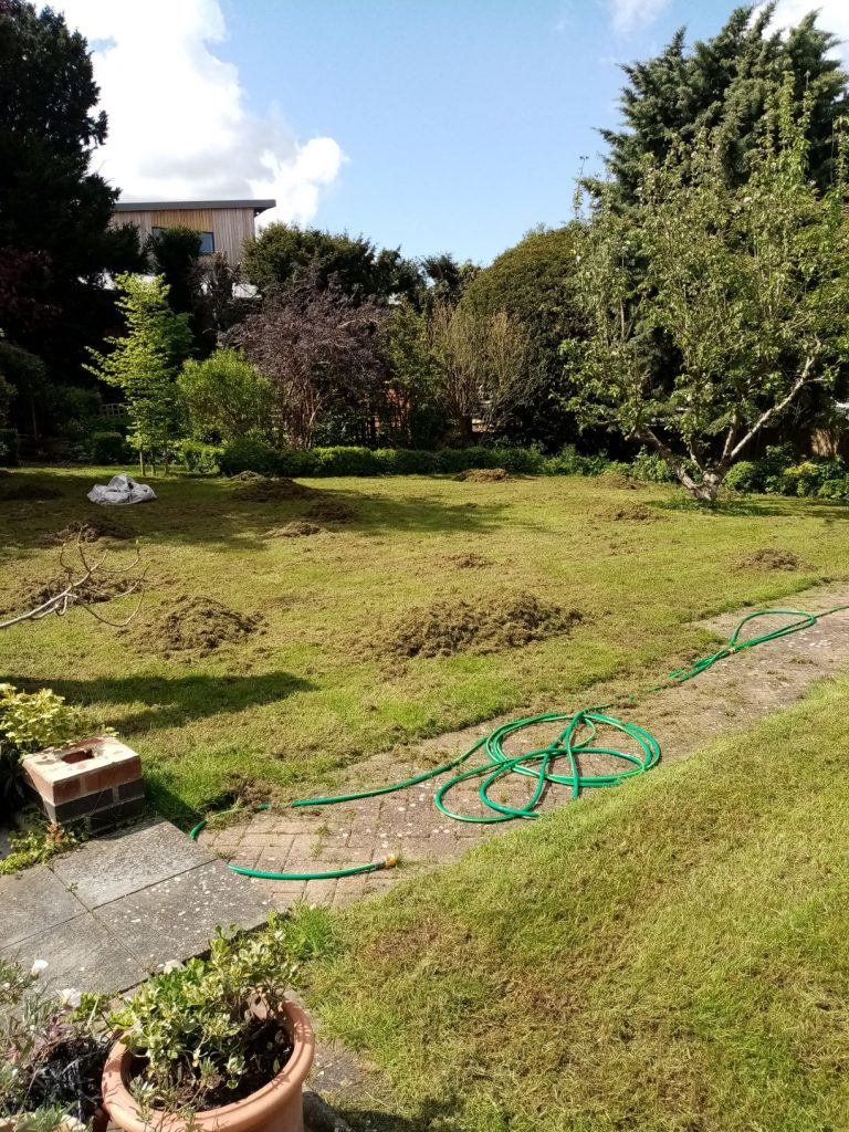 Lawn care in Beccles Waveney During moss, thatch and weed removal
