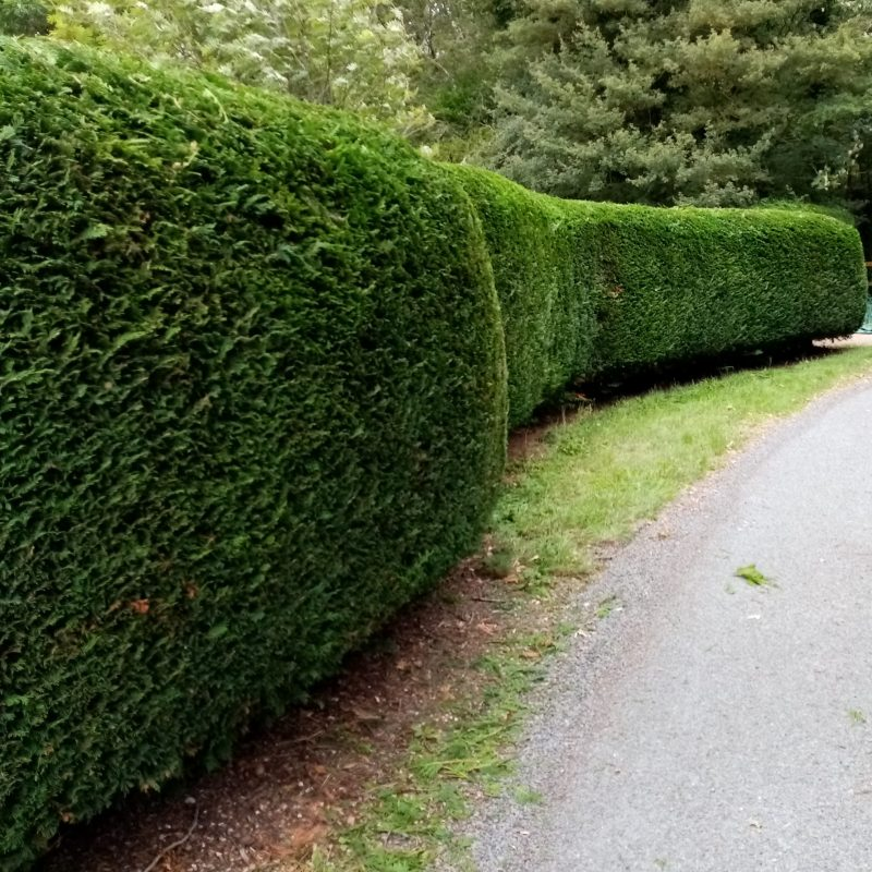 Hedge cutting in Waveney districts Grounds & Gardens- All your garden needs